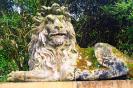 lion_183