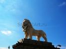 lion_175