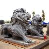 lion_116
