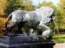 lion_141