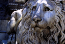 lion_172