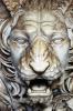 lion_202