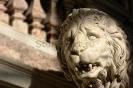 lion_178