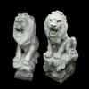lion_041