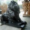 lion_095