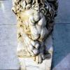 lion_144