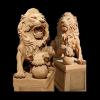 lion_059