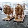 lion_118