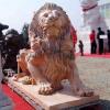 lion_103