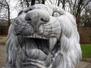 lion_127