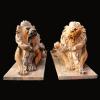 lion_083