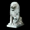 lion_050