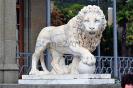 lion_173