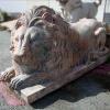 lion_218