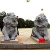 lion_117