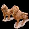 lion_242
