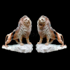 lion_068