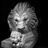 lion_087