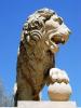 lion_180
