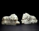 lion_086