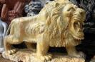 lion_096