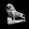 lion_075